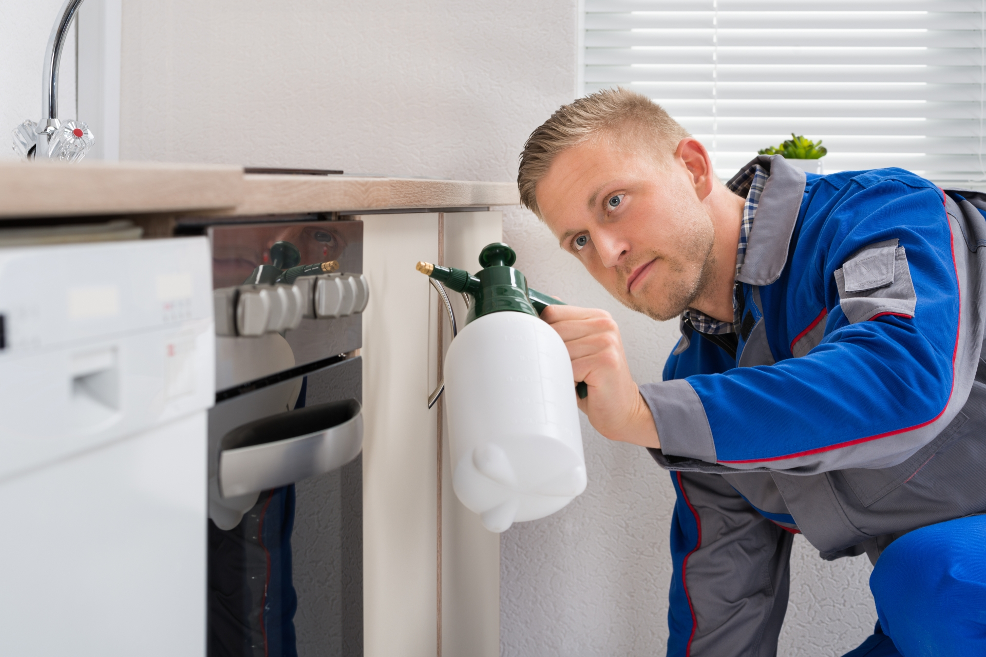 Pest Inspection, Pest Control in Havering-atte-Bower, Abridge, RM4. Call Now 020 8166 9746