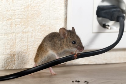 Pest Control in Havering-atte-Bower, Abridge, RM4. Call Now! 020 8166 9746