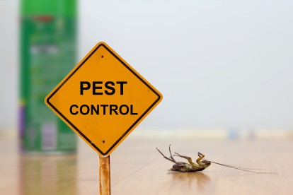 Pest Contol in Havering-atte-Bower, Abridge, RM4. Call Now 020 8166 9746